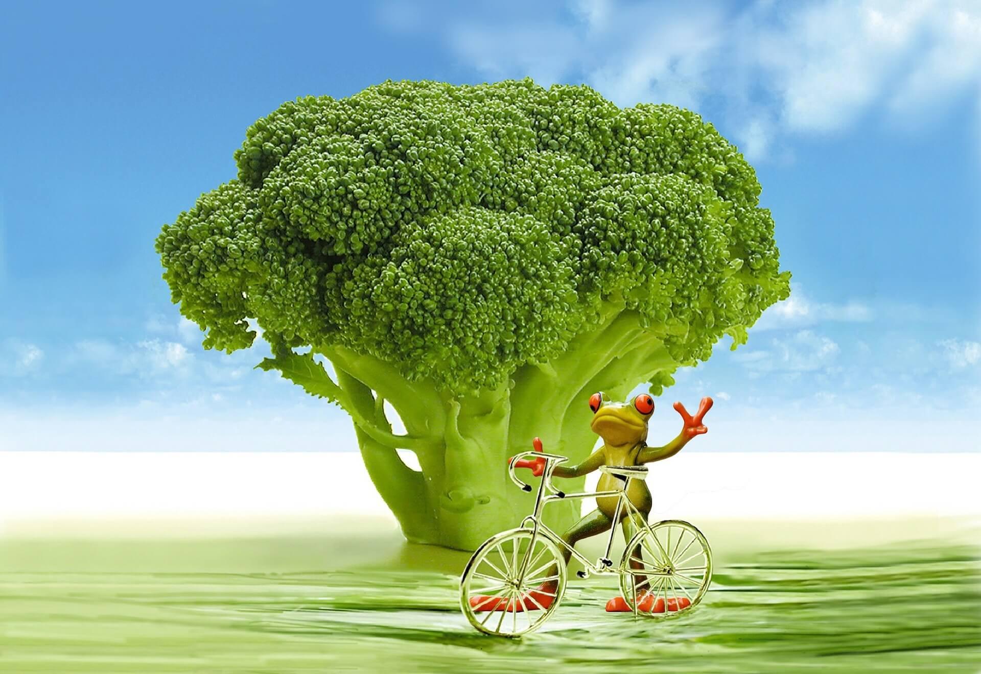 abnehmen brokkoli